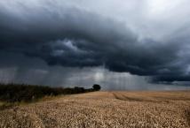 Агрометеорологические условия осени - начала зимы 2019 года и состояние посевов озимых культур - Укргидрометеоцентр