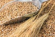 ТОП-5 імпортерів українського ячменю закупили в поточному сезоні 70% зернової - АПК-Інформ