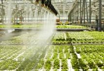 Світовому ринку необхідно збільшувати виробництво кормових культур - експерт