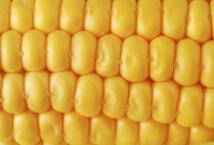 У листопаді поставки українських зернових до Єгипту зростають