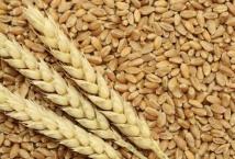 Египет в 2021/22 МГ намерен собрать до 9 млн тонн пшеницы