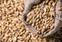 «Континентал Фармерз Групп» осталось засеять менее 40% площадей озимой пшеницей