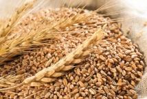 В Украине намолочено более 60 млн тонн зерна