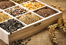 European Parliament recognized Ukraine as an equal participant of European seed market