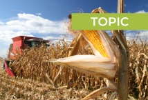 Problems with corn production in 2020, and farmers' plans for 2021/22 MY