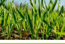 Украина: погодные условия и состояние сельскохозяйственных культур в апреле 2021 года