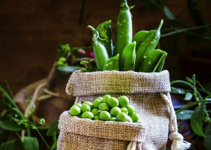 Season of paradoxes for Ukrainian market of peas: one year without India while prices growing