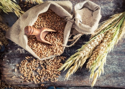 Export of Ukrainian and Russian grain: strengthening positions on new old markets