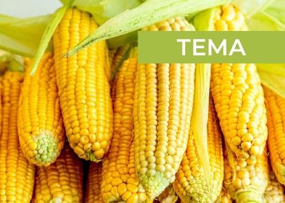 2020 и одна причина турбулентности на рынке кукурузы Украины (АПК-Информ: ИТОГИ №3 (81))