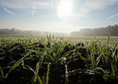 Украина: погодные условия и состояние растений озимых зерновых культур в марте 2021 года
