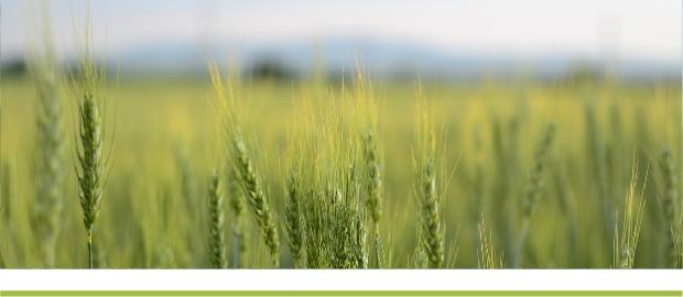 Украина: погодные условия и состояние сельскохозяйственных культур в Украине в мае 2021 года – НААН