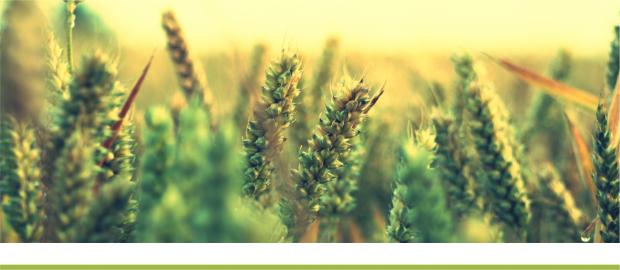 Погодные условия и состояние сельскохозяйственных культур в Украине в июне 2021 года – НААН Украины