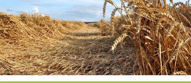 Погодные условия и состояние сельскохозяйственных культур в Украине в августе 2021 года и эколого-технологическое обеспечение сева озимых зерновых культур – НААН Украины